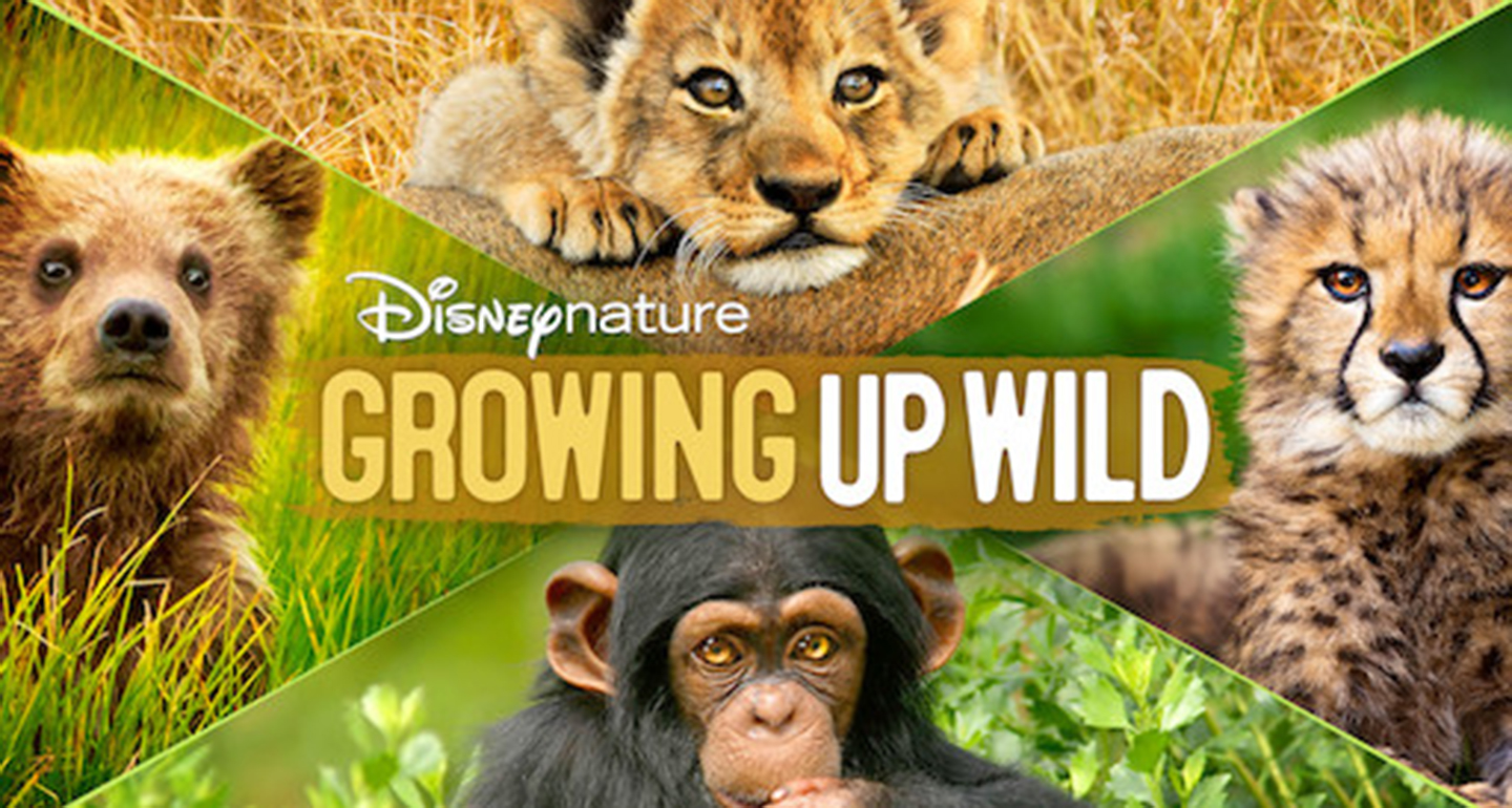 what to stream - growing up wild