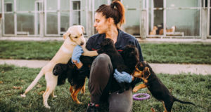 chewy adn Greatgood.org partner to help shelter pets impacted by coronavirus