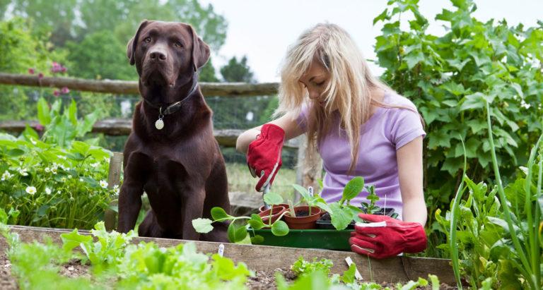 gardening with dog