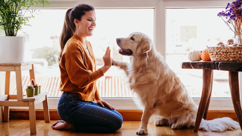 dog parent type - super