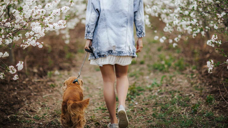 coronavirus and pets -social distancing