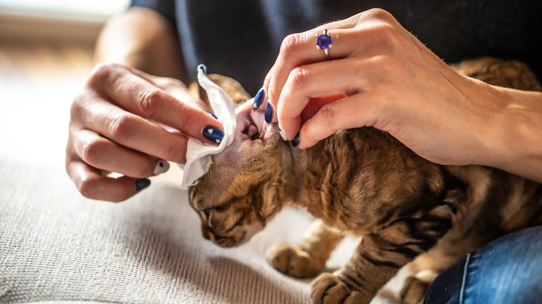 coronavirus and pets - grooming