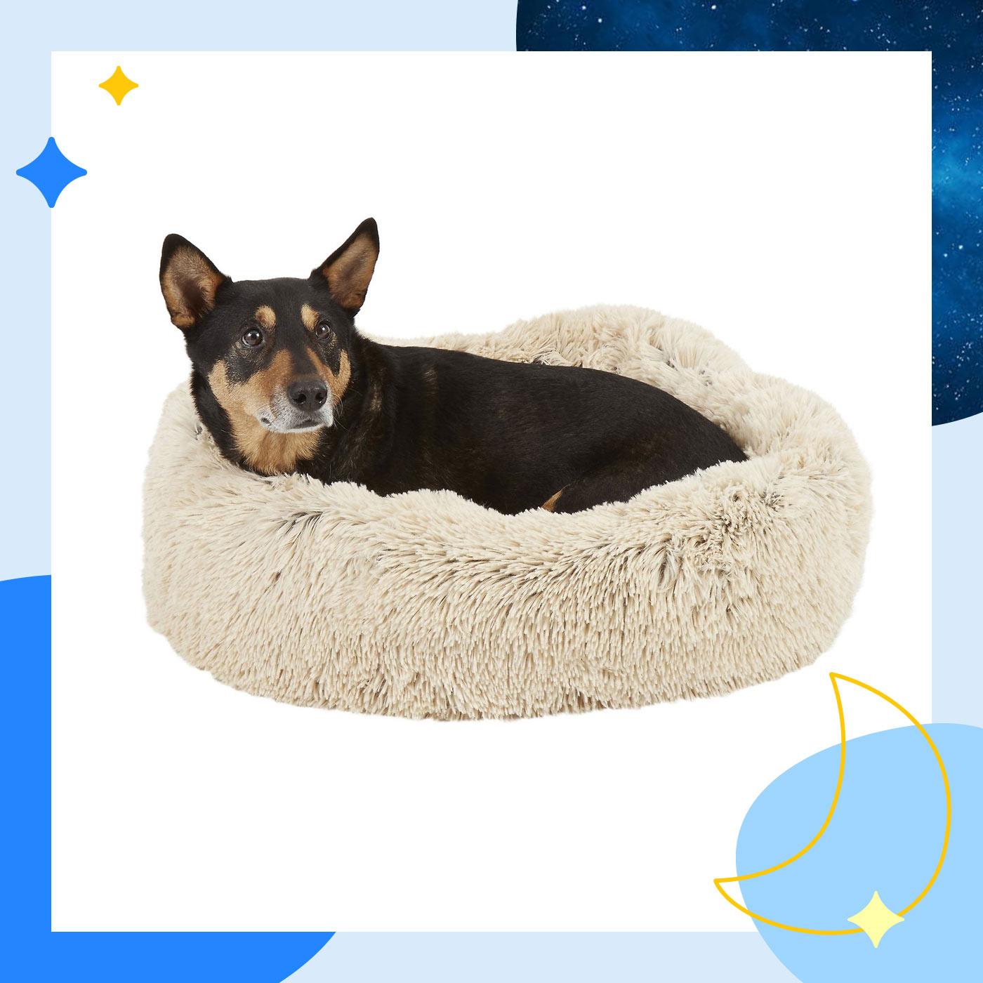 best dog bed