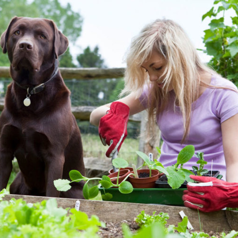 Garden for your pets
