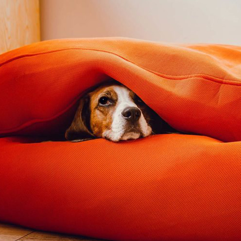 Stress in pets