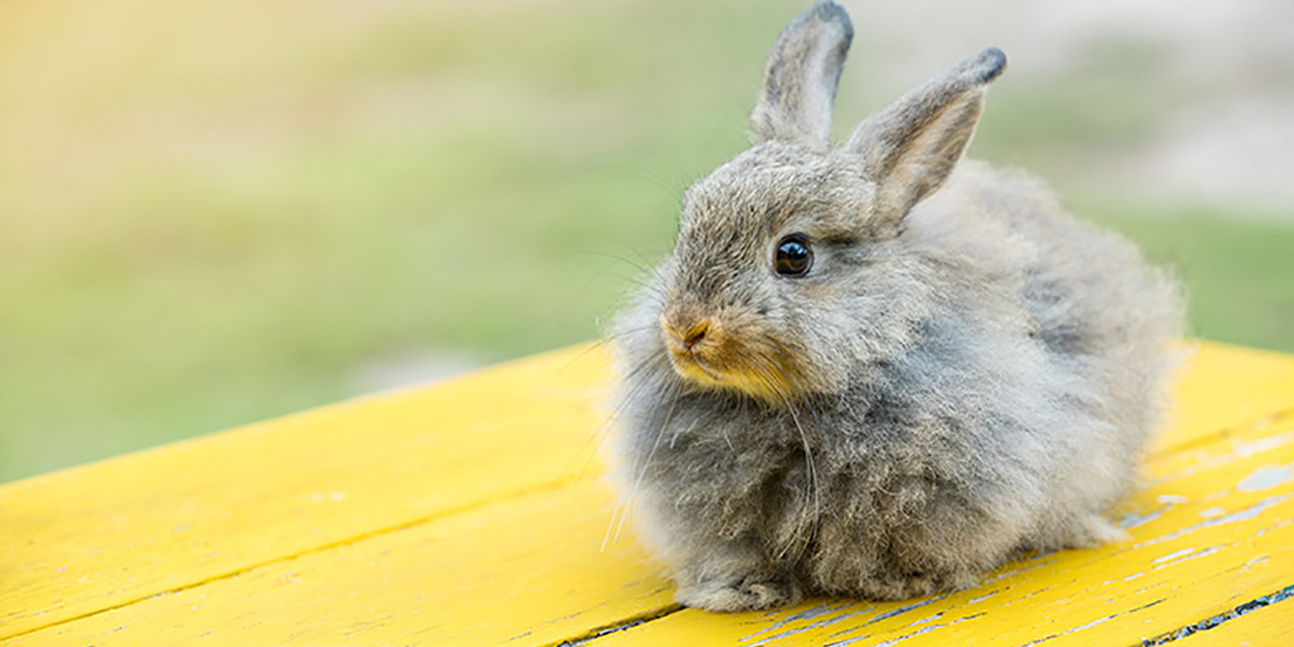Rabbit Names For Your New Bunny