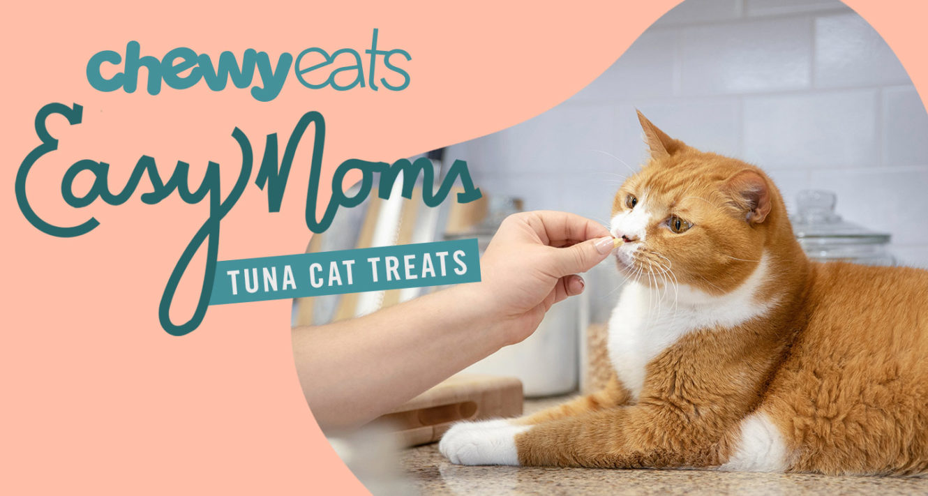 DIY Cat Treat