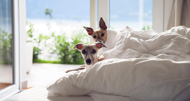Pet-friendly summer linens