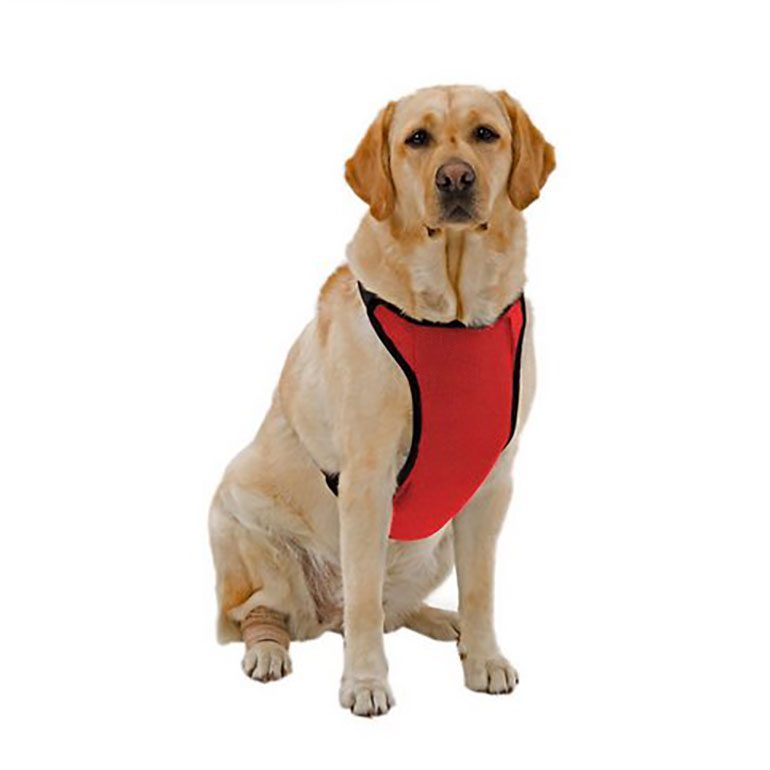 cooling summer harness for dogs
