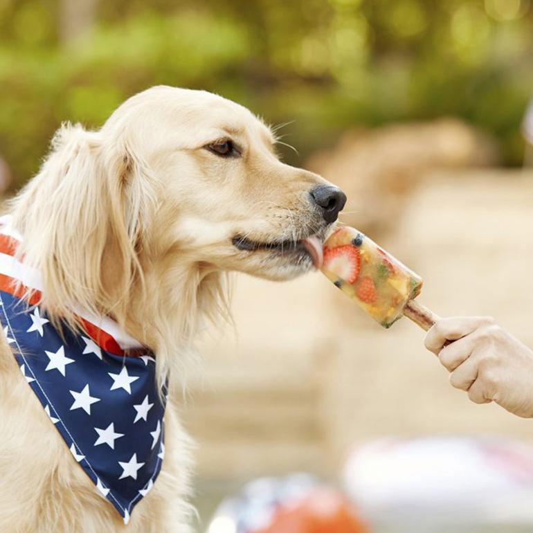 Pupsicle DIY dog treat