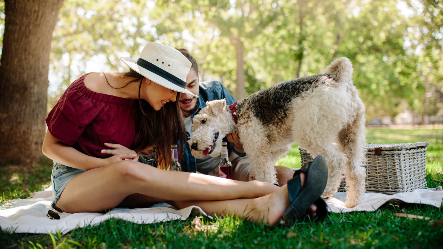 pets in summer - picnic