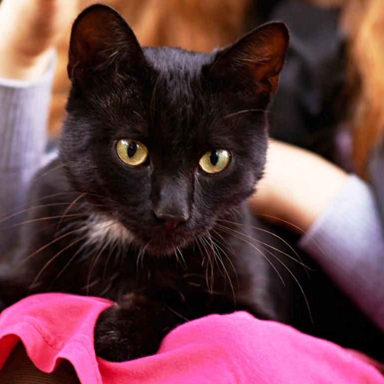 Black cat adoption halloween