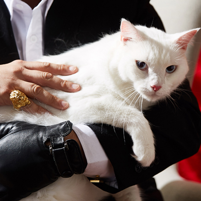 Famous evil cats