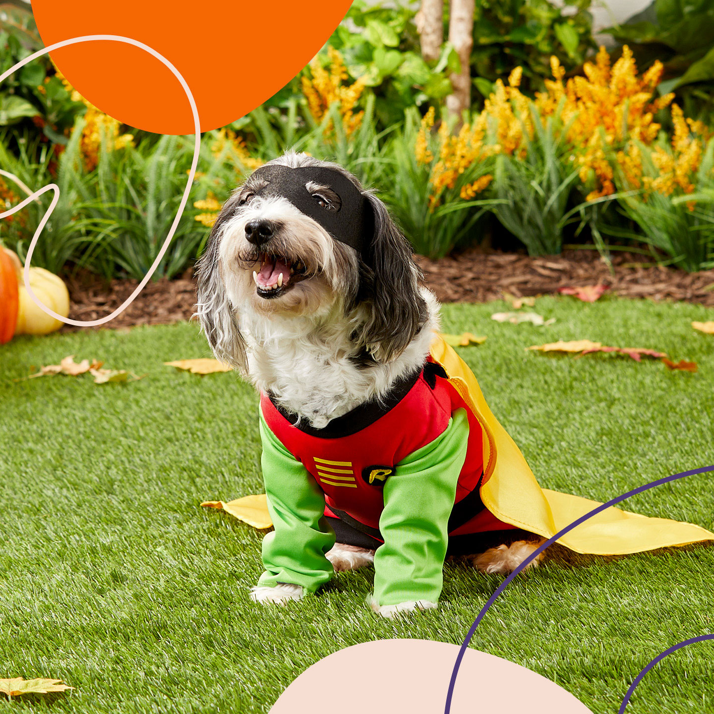 Bst large dog halloween costumes - robin