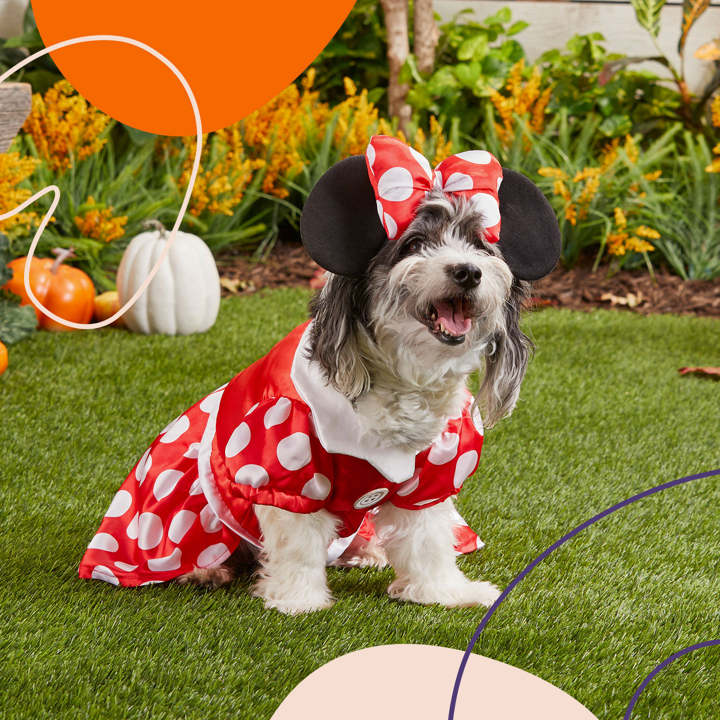 Halloween Costumes for Girl Dogs