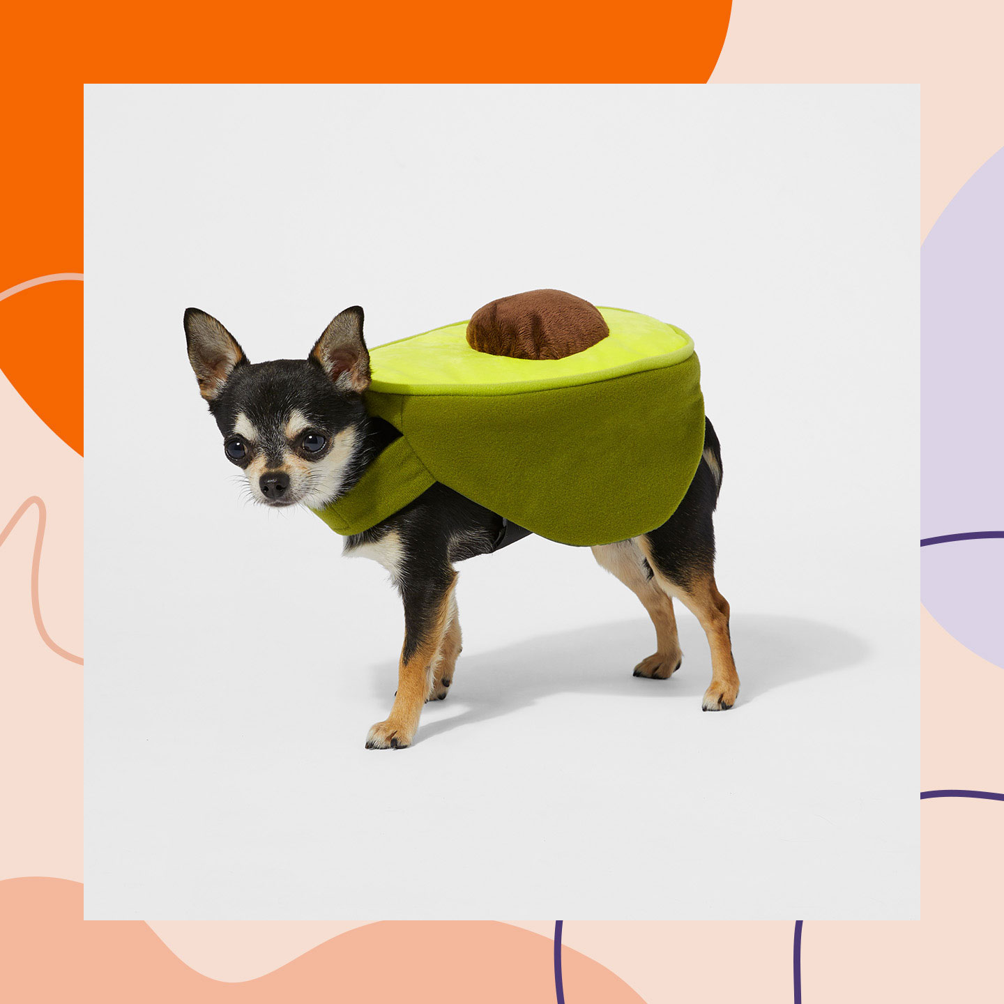 best funny dog costumes for Halloween