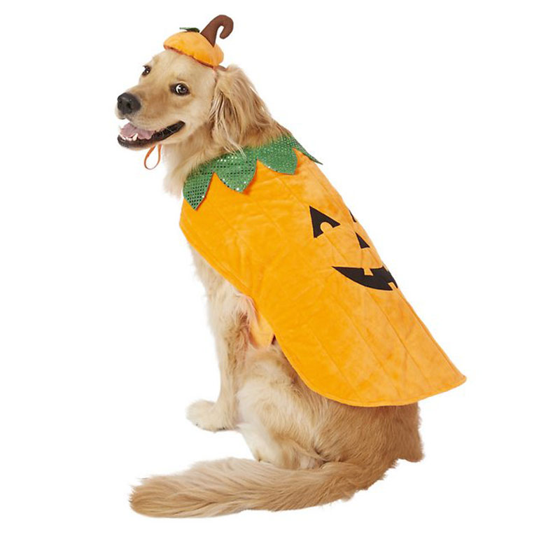 Large Dog Halloween Costumes pumpkin