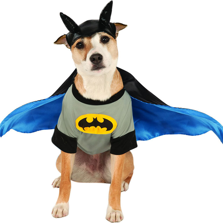 dog Halloween costumes - batman