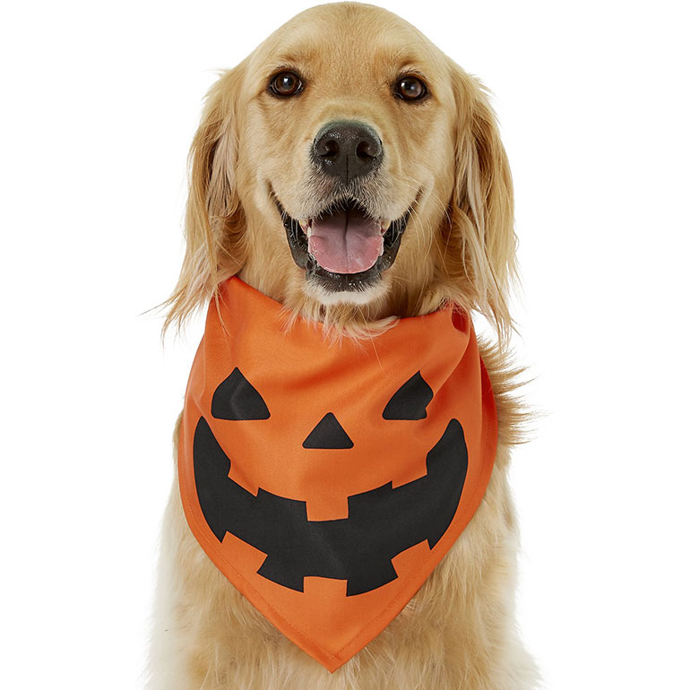 dog halloween bandana - jack-o-latern