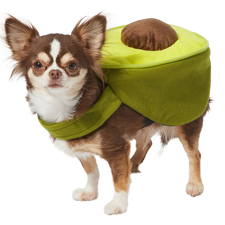 cute dog halloween costumes- avocado