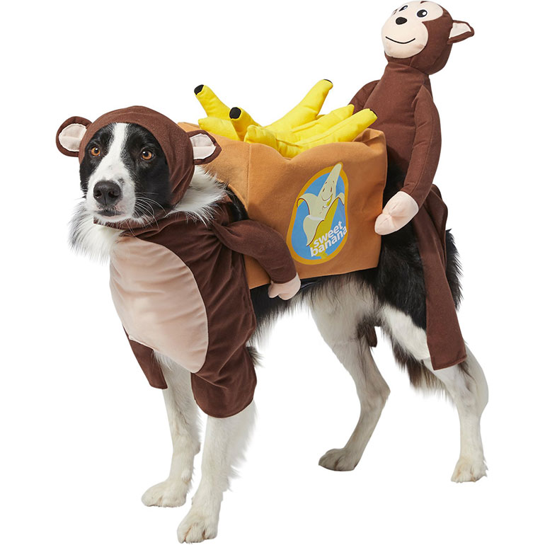 funny dog costume - monkey