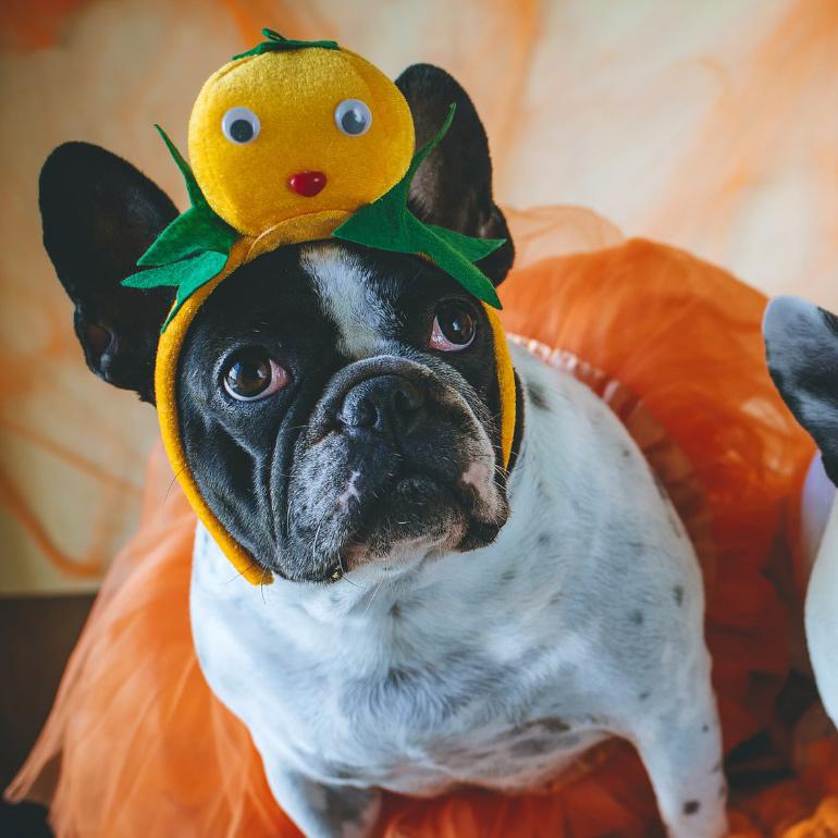 Halloween pet party