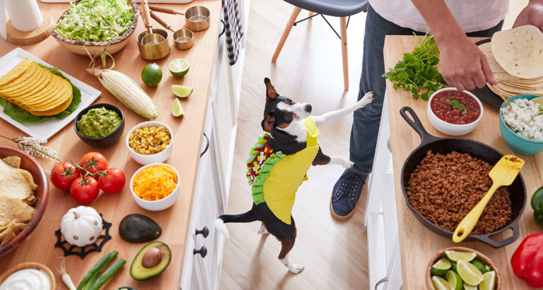 best dog Halloween costume ideas - Food
