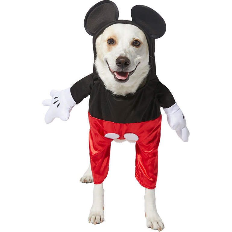2020 Halloween Costumes On The Chew Dog Halloween Costume Ideas Inspired by Your Hobbies