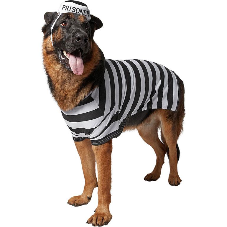 large dog halloween costumes - prisoner