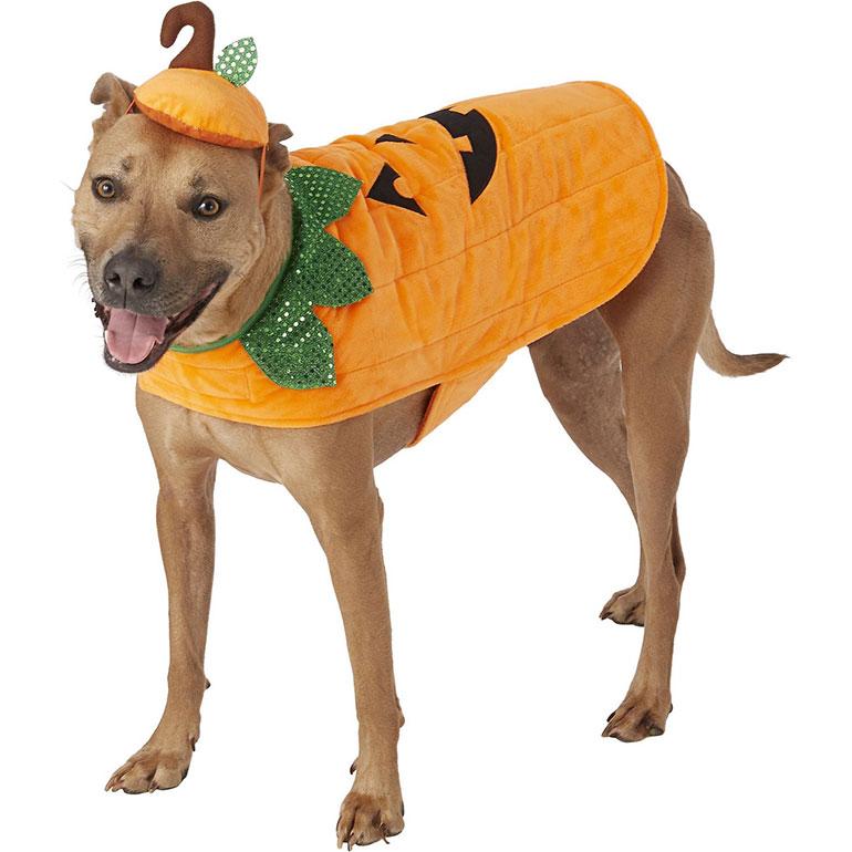 large dog halloween costumes - pumpkin