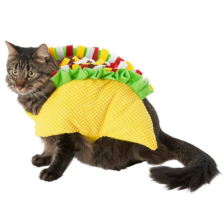 cat Halloween costume - taco cat