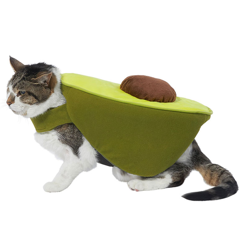 cat Halloween costume - avocado cat