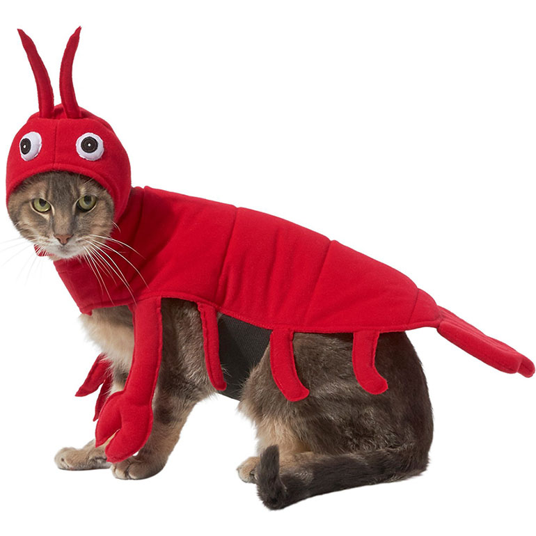 cat halloween costume -lobster