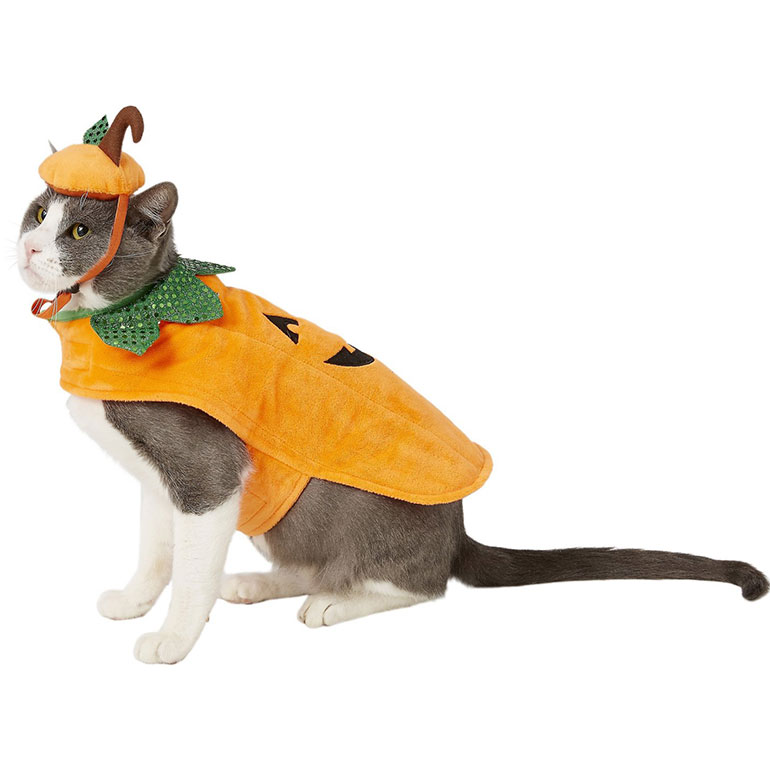 cat halloween costumes - pumpkin