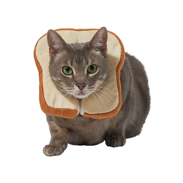 cat Halloween costumes - bread head