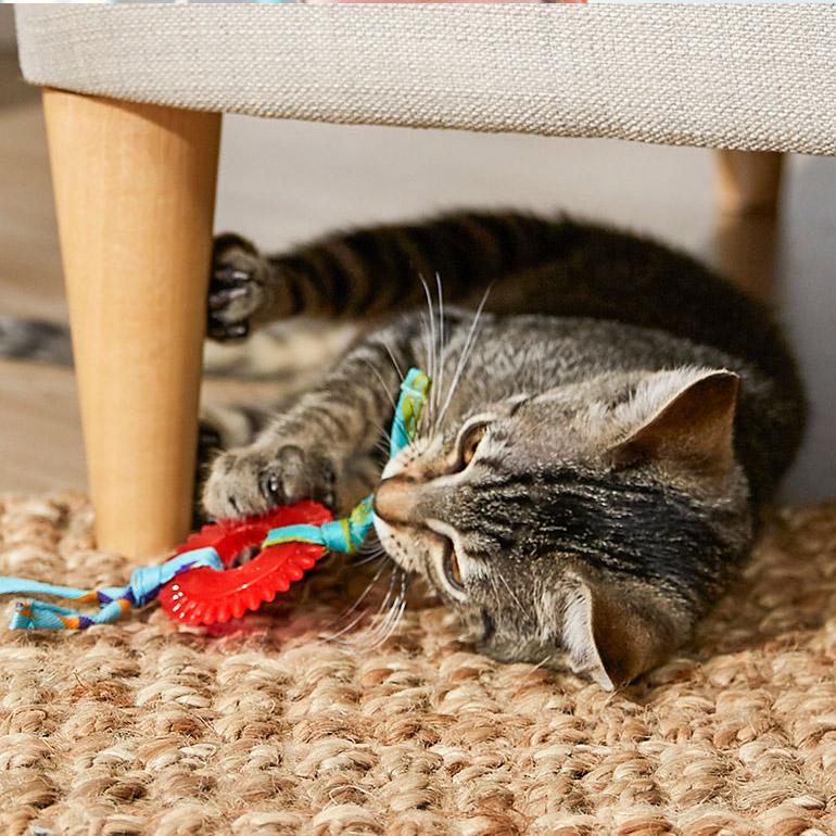Kitten teething
