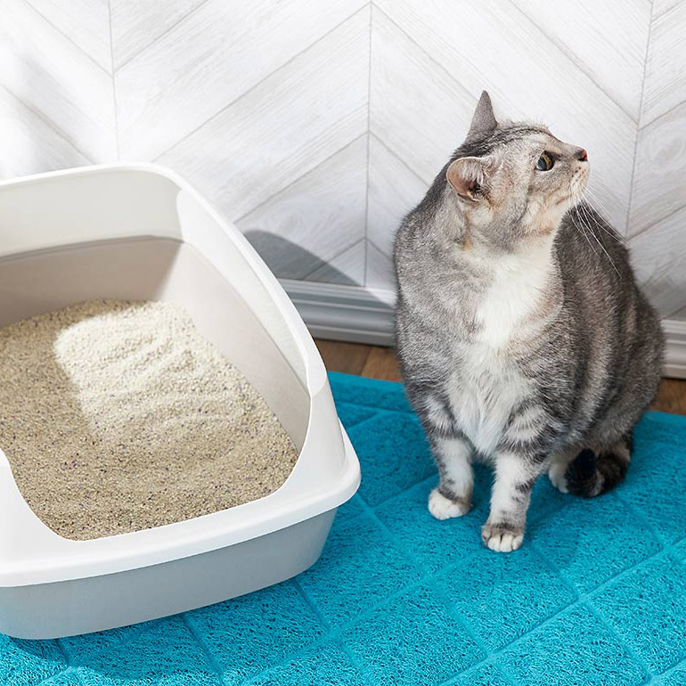 Senior cat litter box problems