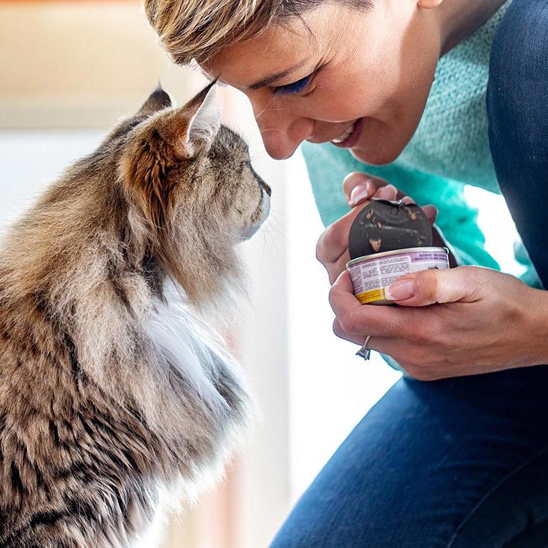 Best senior cat food