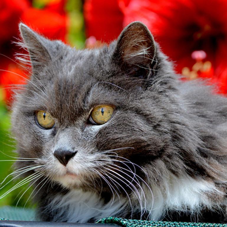 Senior cat health