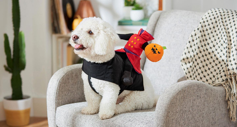 headless rider small dog costume