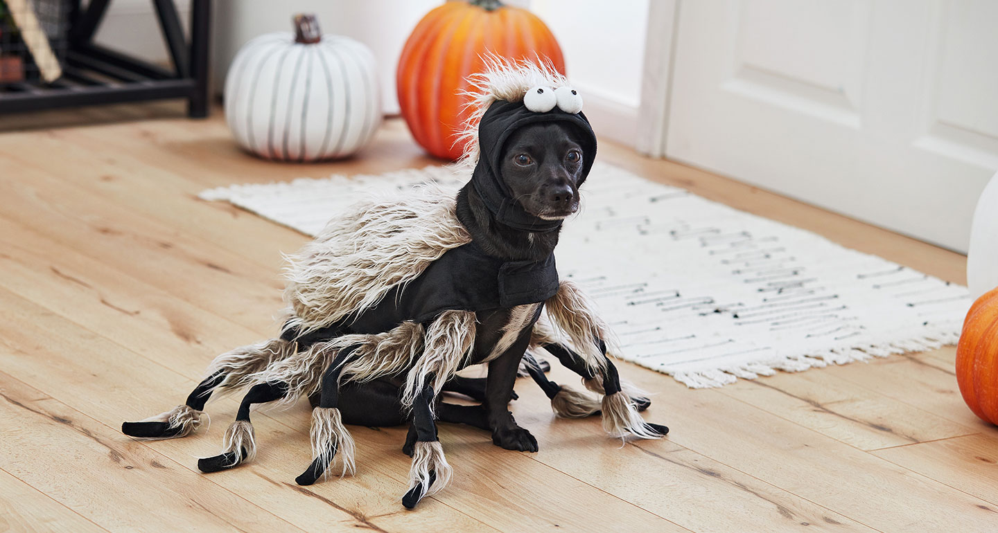 small dog costumes for halloween - spider
