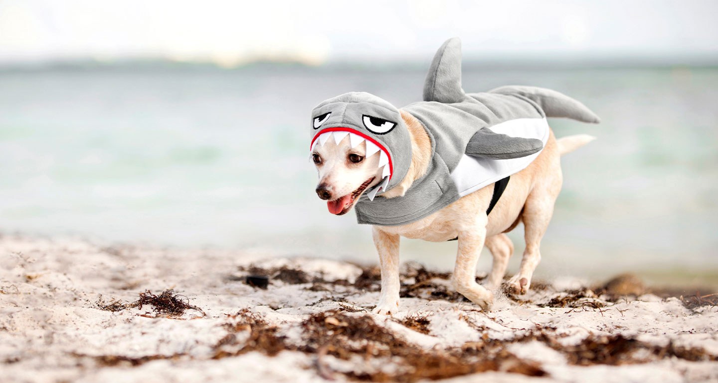 Animal Costumes for Dogs  - dog shark costume