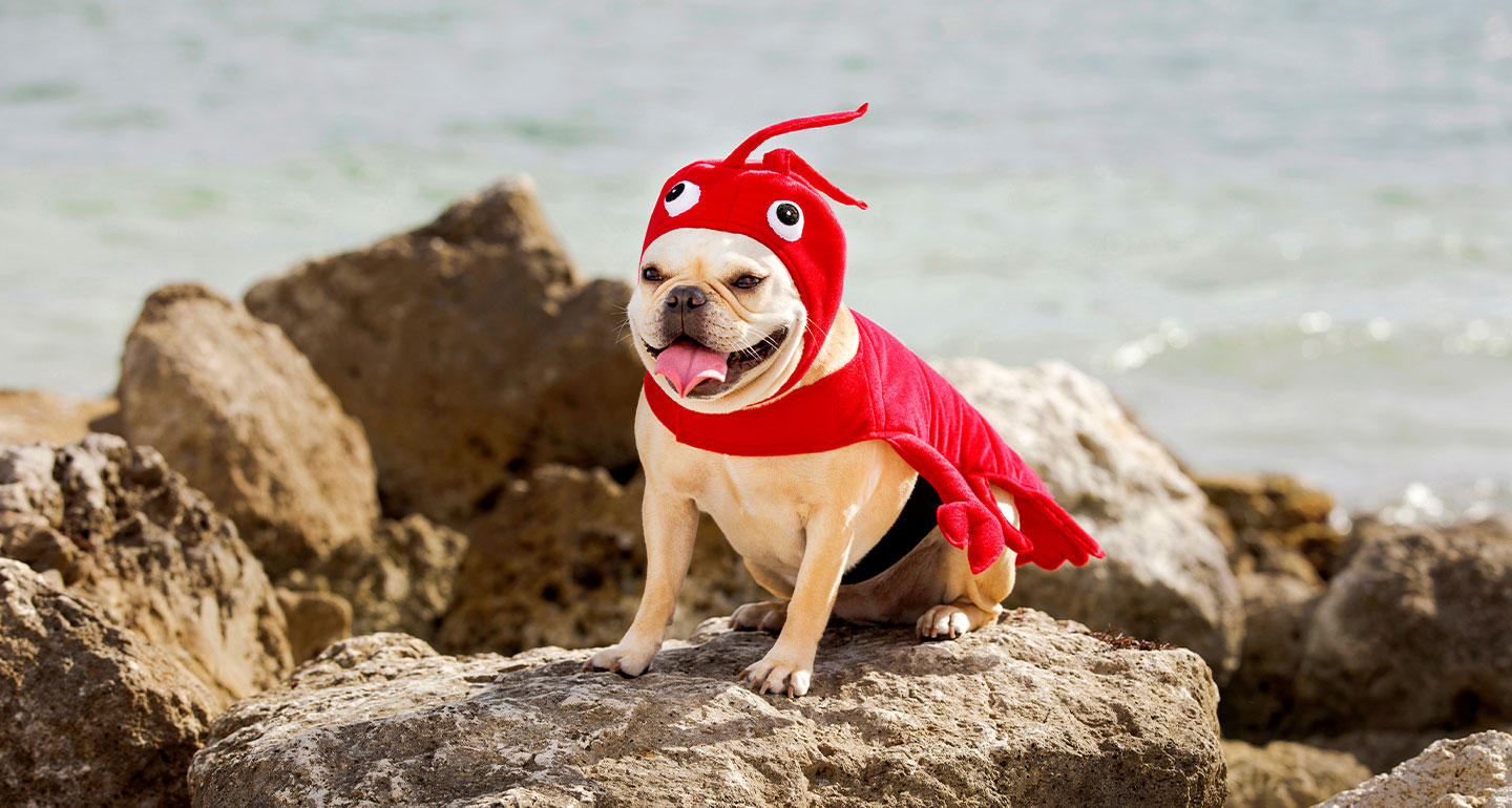 Animal Costumes for Dogs - dog lobster column