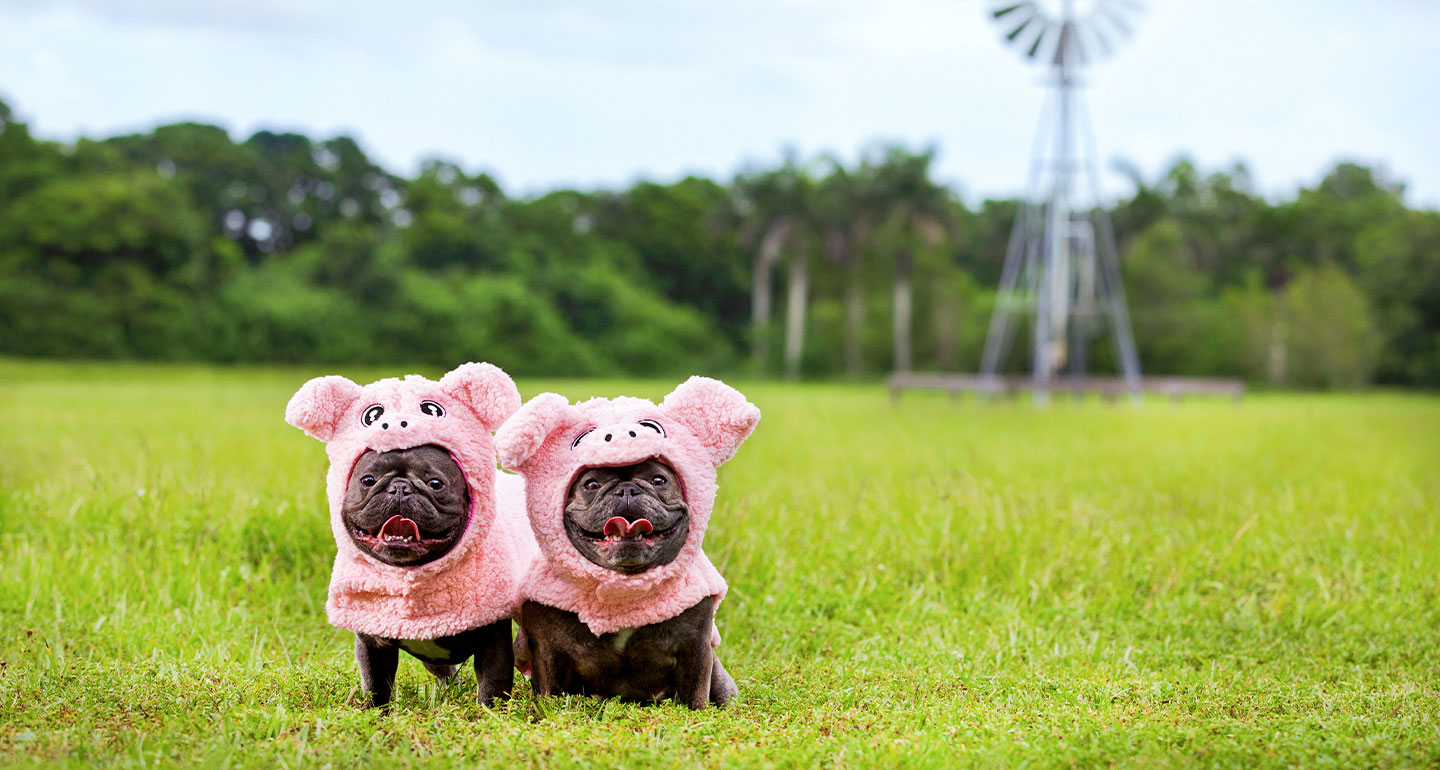 Animal Costumes for Dogs - Dog Pig Costume