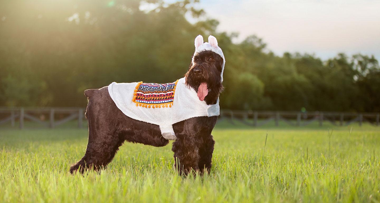 Animal Costumes for Dogs  - llama dog costume
