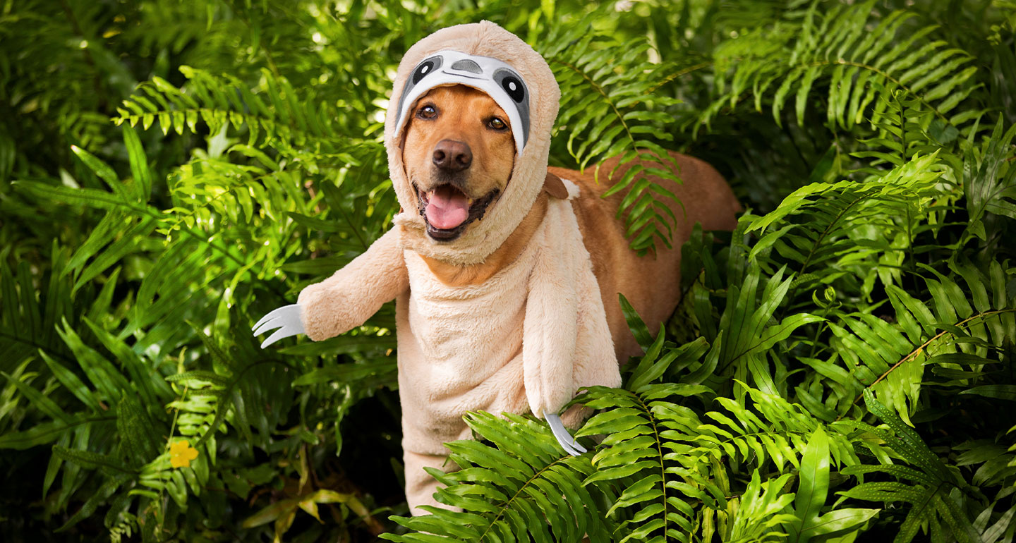 animal costumes for dogs - sloth dog costume