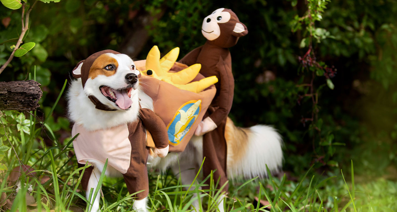 animal costumes for dogs - monkey dog costume