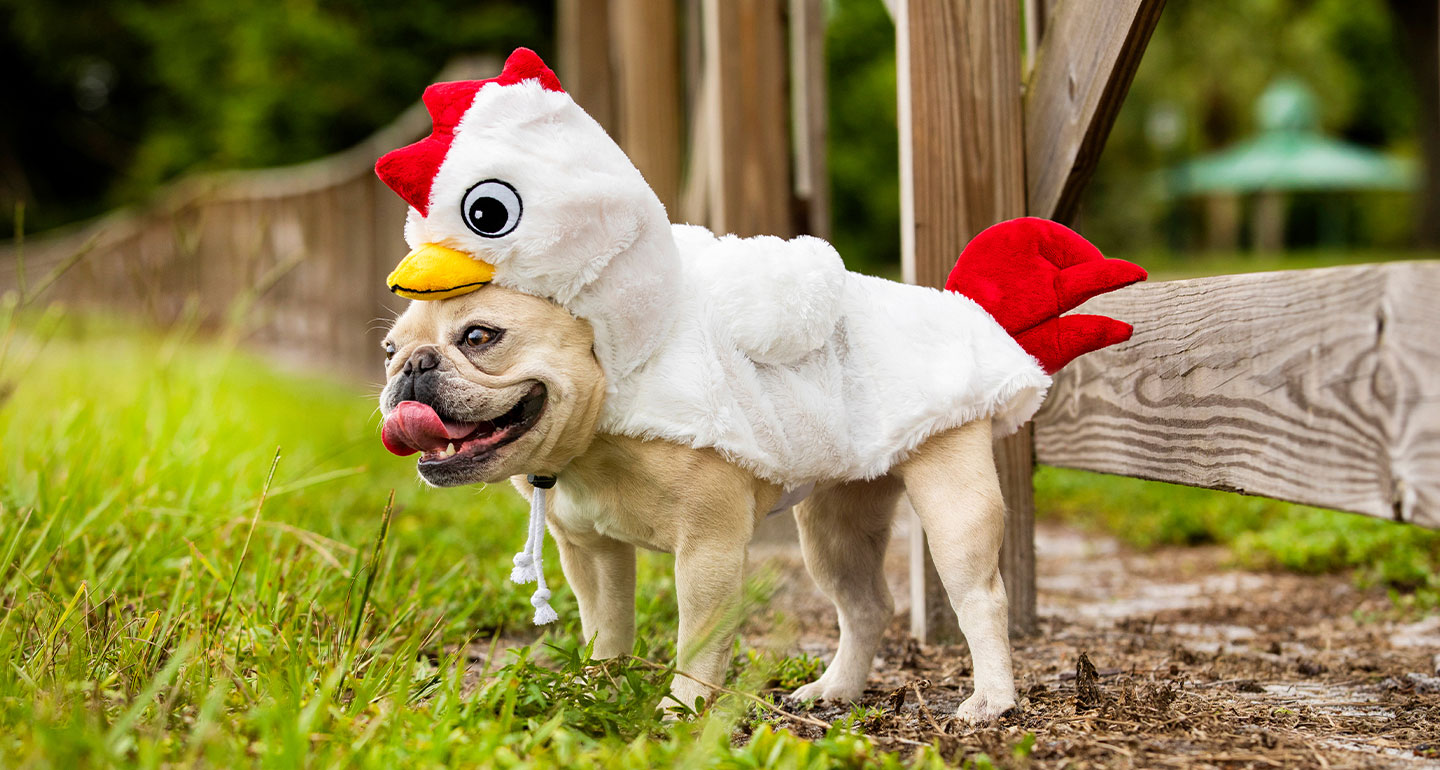 animal costumes for dogs - chicken costume