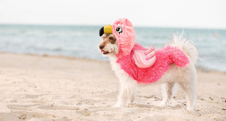 animal costumes for dogs - flamingo dog costume