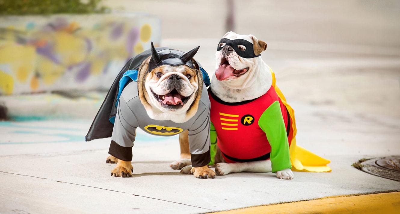 dog superhero costumes batman robin halloween dog costumes